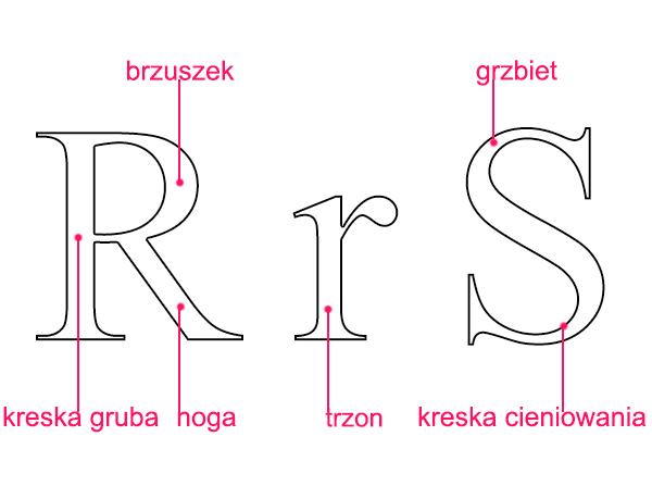 kreska gruba, brzuszek, noga, trzon, grbiet, kreska cieniowana - Liternictwo i typografia